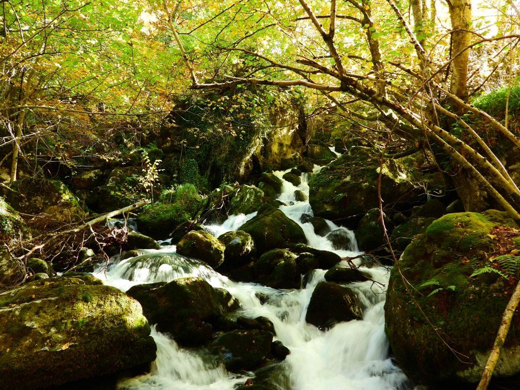 Foto de cascada en Asturias , musgo arboles y agua